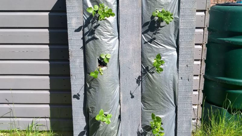 verticaal-tuinieren